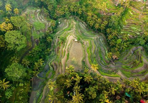 Ubud Taxi Driver to Tegalalang Rice Terrace (Affordable Price) - Water Blow Bali