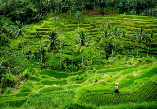 Bali Ubud Taxi to Tegalalang Rice Terraces - Private Trip