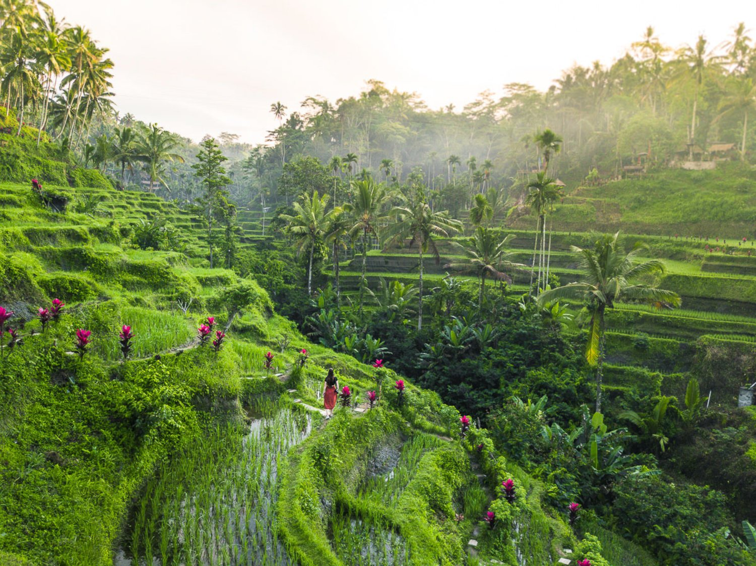 Bali Taxi Driver to Tegalalang Rice Terrace (Private Service)