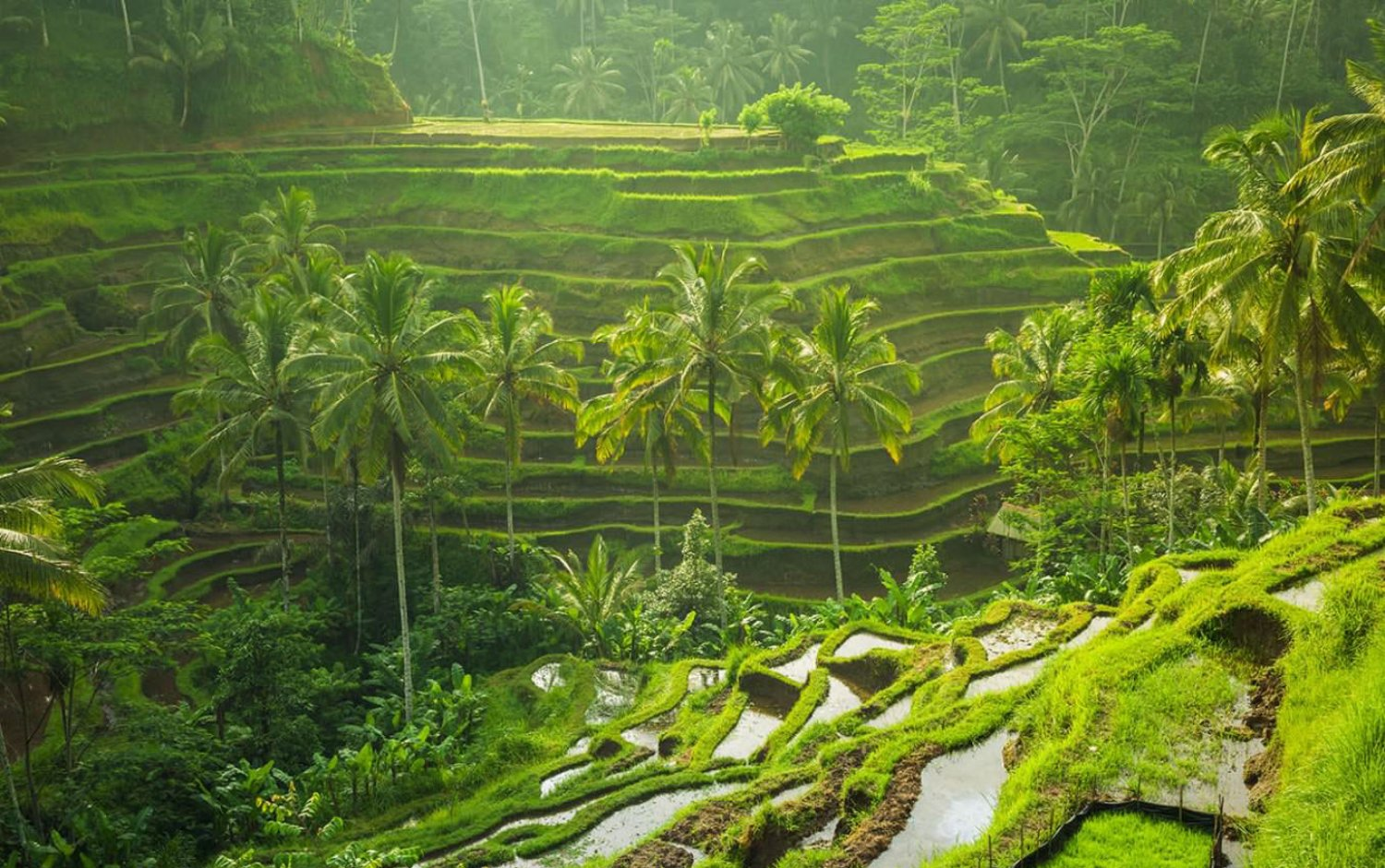 Private Taxi Service from Ubud to Tegalalang Rice Terrace