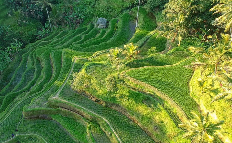 Tegalalang Rice Terraces Taxi